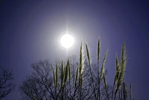 太陽とススキの写真素材 [FYI00174878]