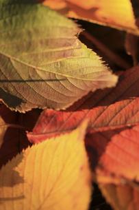 落ち葉の写真素材 [FYI00174892]