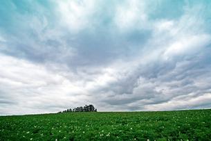 草原の中の林の写真素材 [FYI00174908]