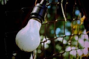 自然の中の電球の写真素材 [FYI00174916]