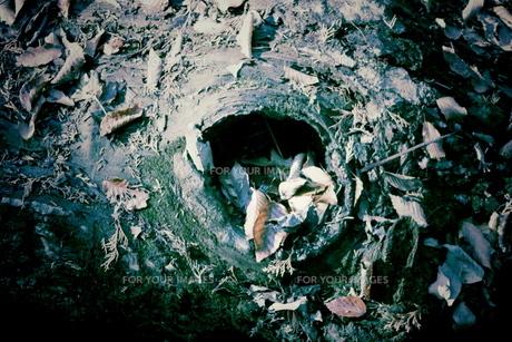 木の穴の写真素材 [FYI00174935]
