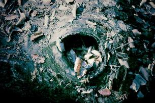 木の穴の素材 [FYI00174935]