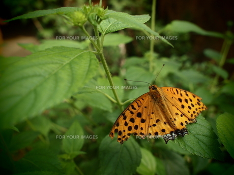 黄色い蝶と草花の素材 [FYI00174954]