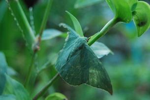 美しい緑の羽休めの写真素材 [FYI00175186]