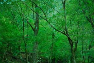 深森の散歩の写真素材 [FYI00175216]