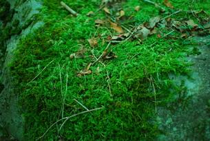 秋の深緑の写真素材 [FYI00175236]
