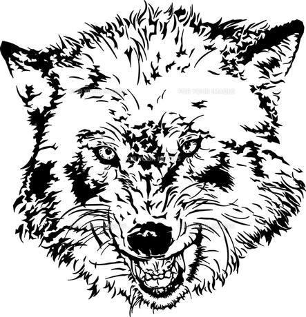 狼の写真素材 [FYI00175309]