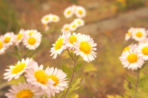 花 の写真素材 [FYI00175327]
