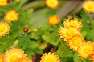 蜂の写真素材 [FYI00175336]