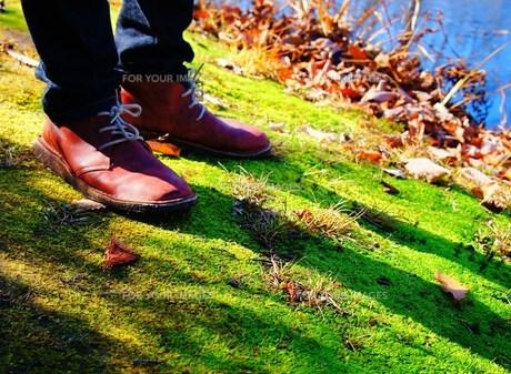 苔の道 散歩の写真素材 [FYI00175344]