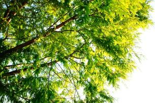 緑の木の写真素材 [FYI00175357]