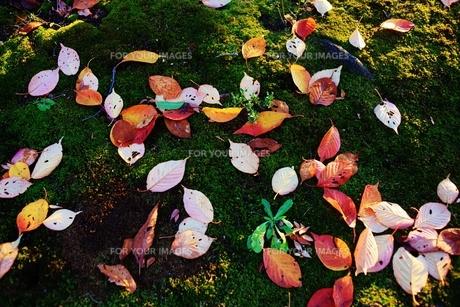 苔と落ち葉の素材 [FYI00175453]