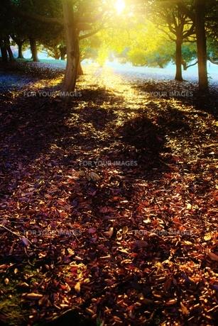落ち葉と夕日の素材 [FYI00175483]
