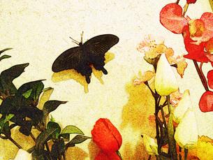 蝶と花の写真素材 [FYI00175492]