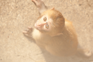 猿の写真素材 [FYI00175539]