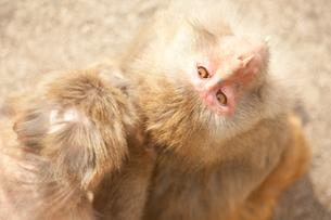 猿の写真素材 [FYI00175540]