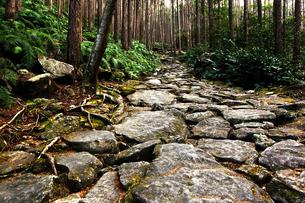 熊野古道の写真素材 [FYI00175570]