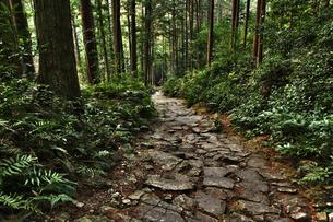 熊野古道の写真素材 [FYI00175577]