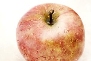 林檎の写真素材 [FYI00175667]