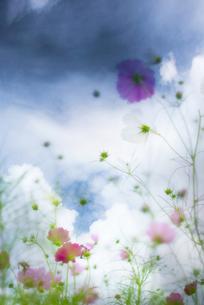 花と青空の写真素材 [FYI00175754]