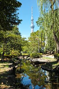 東京スカイツリーの写真素材 [FYI00175804]