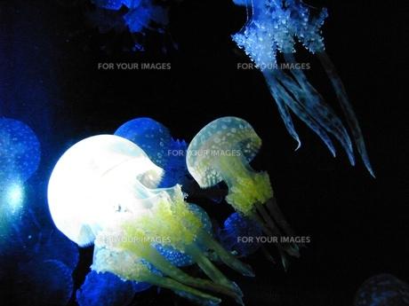 水族館の光るクラゲの写真素材 [FYI00175860]