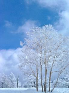 樹氷の写真素材 [FYI00175917]