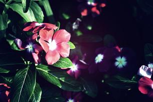 日ざしで浴びる花の素材 [FYI00175934]
