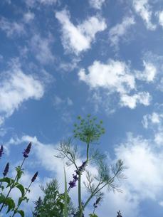 屋上ハーブ園の写真素材 [FYI00175962]