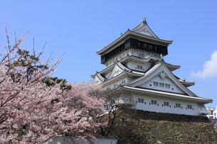 桜と小倉城の写真素材 [FYI00175993]