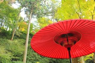 和傘の素材 [FYI00176035]