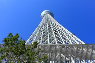 東京スカイツリーの写真素材 [FYI00176222]