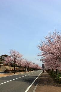 街並みと桜並木の素材 [FYI00176357]