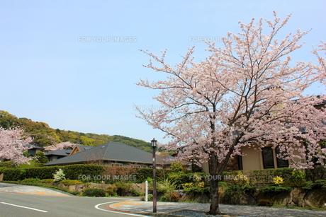 街並みと桜並木の素材 [FYI00176371]