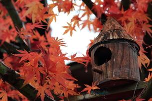 秋の宿の写真素材 [FYI00176377]