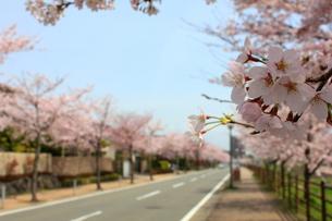 街並みと桜並木の素材 [FYI00176379]
