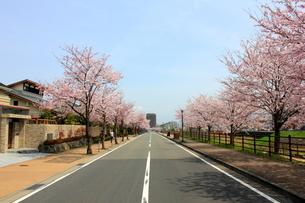 街並みと桜並木の素材 [FYI00176381]