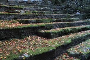 石段と落葉の写真素材 [FYI00176383]