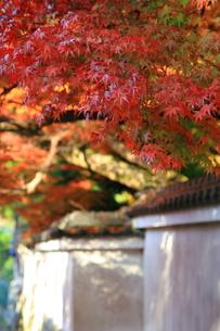 秋の屋根の写真素材 [FYI00176386]