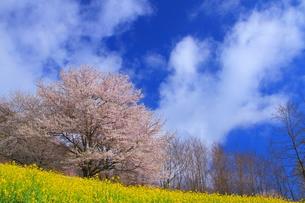 春の風景の写真素材 [FYI00176388]
