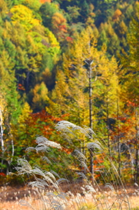 秋景色の写真素材 [FYI00176394]