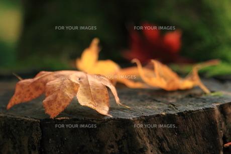 秋も終わりの写真素材 [FYI00176422]