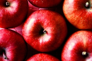 りんごの写真素材 [FYI00176515]