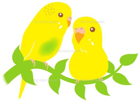 仲良しな黄色いセキセイインコの写真素材 [FYI00176589]