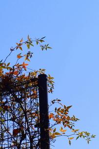 色づく葉の写真素材 [FYI00176634]