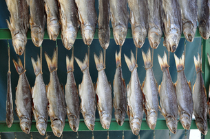 Macau Dried Fishの写真素材 [FYI00176717]