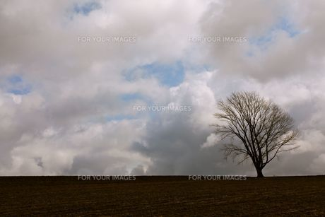 気になる木の素材 [FYI00176781]