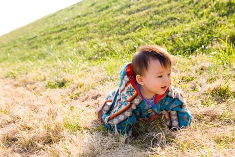 芝生でハイハイする赤ちゃんの素材 [FYI00176853]