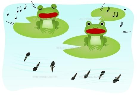 蛙の歌の素材 [FYI00177322]