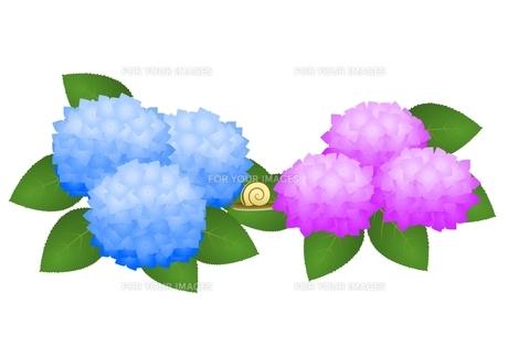 紫陽花 かたつむりの素材 [FYI00177333]